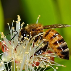 Neonicotinoid Pesticides: Bad for Bees, Bad for Many Other Species