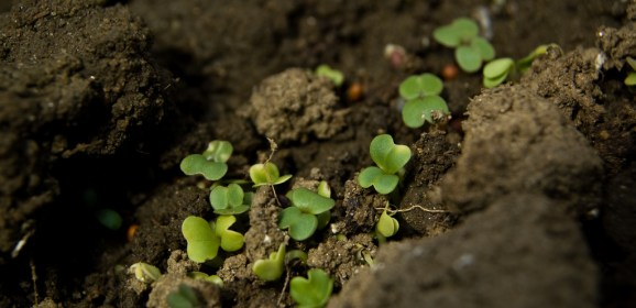 Soils Are Threatened: Can We Halt The Problem?