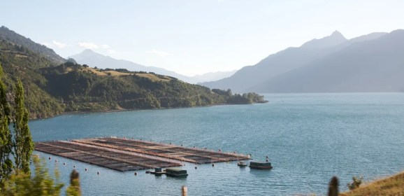 Farmed Salmon Develop Ear Deformities All Around the World