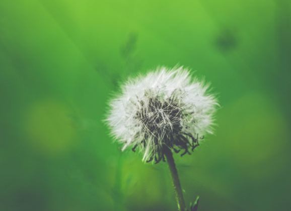 Allergies in Young Children: Effects of Exposure to Multiple Air Pollutants During Prenatal and Early Life