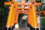 Kyoto-toriiTemple