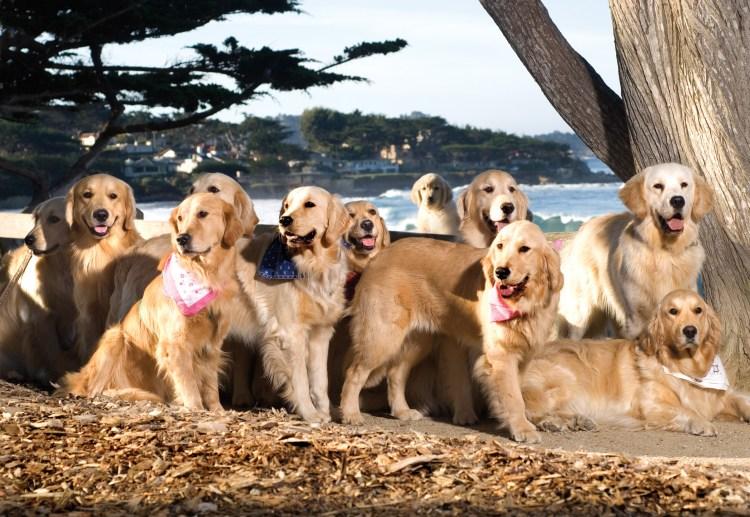 Carmel Beach Dog Friendly
