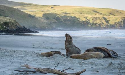 Exploring the Otago Peninsula with ELM Wildlife Tours