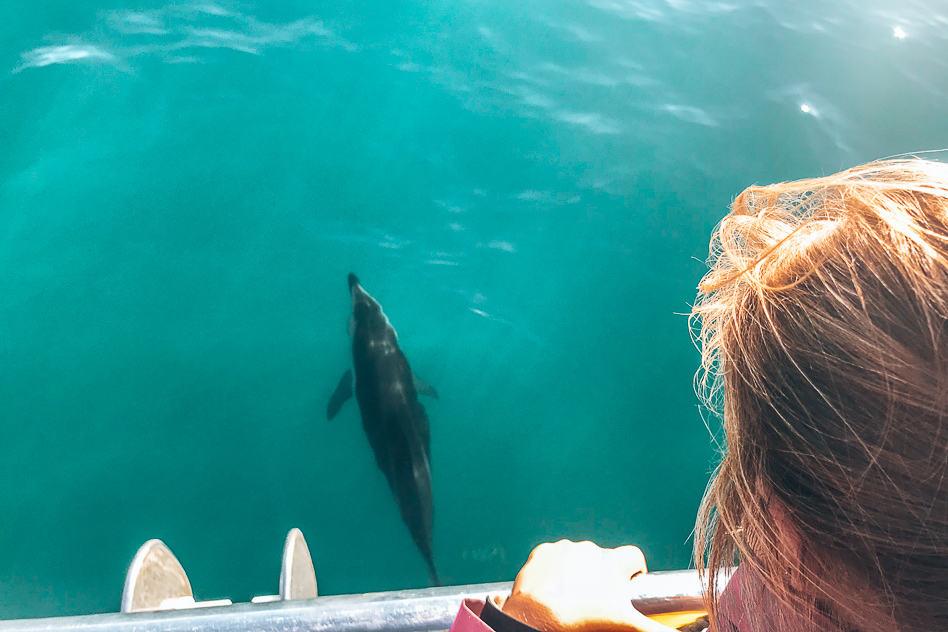 Kids Family Dolphin Encounter Watching Kaikoura