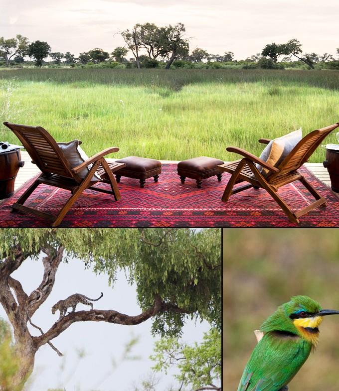 Botswana miracle africain animaux 1