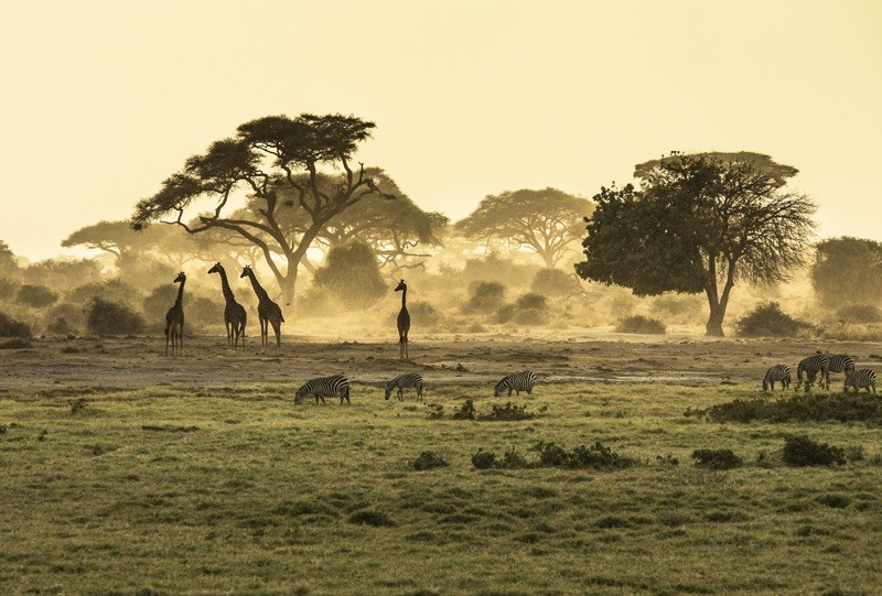 tanzanie reserve du serengeti big 5 girafe