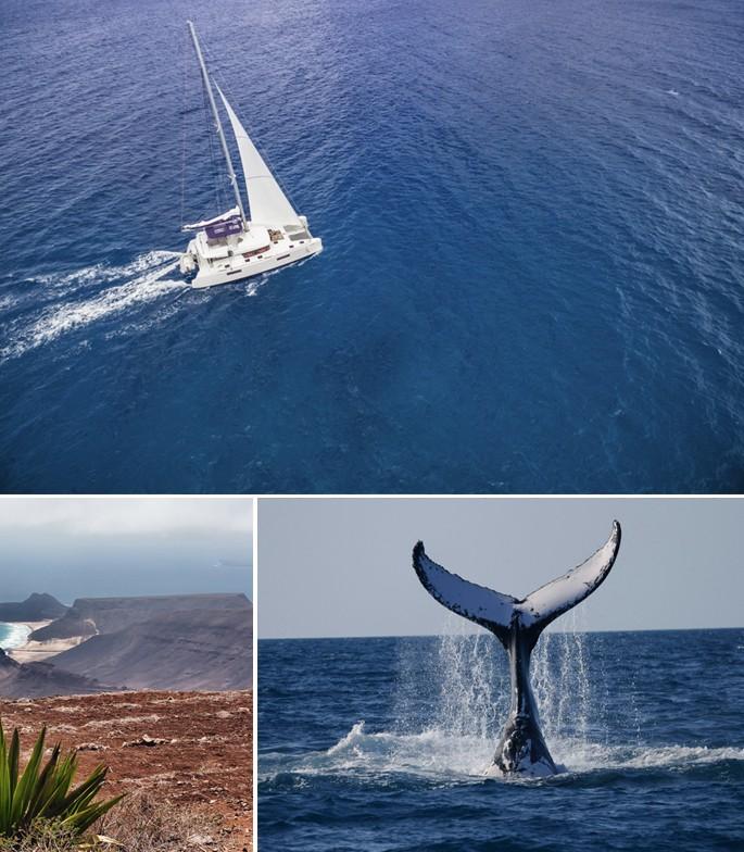 Observation baleines Cap Vert