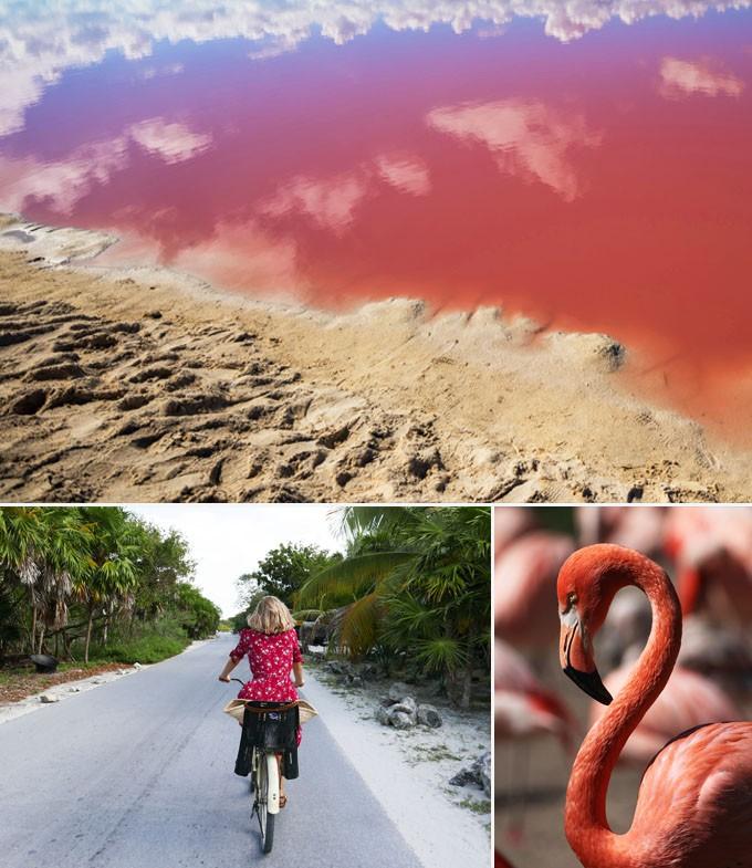 Rio lagartos mexique yucatan a faire