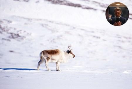 Ranua Zoo faune laponne Rovaniemi Finlande a faire