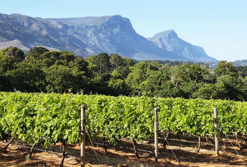 Vignoble de Constancia Afrique du sud a voir