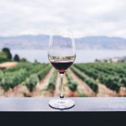 vin argentine