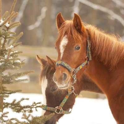 3919-cortina-cheval