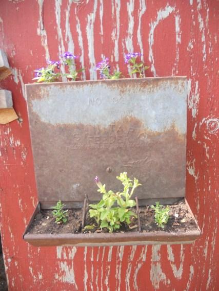 Purple Verbena, Bacopa and a Petunia