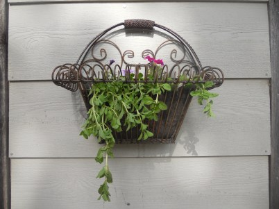 a white elephant gift. I lined it with screen and filled it will petunias & Pennyroyal