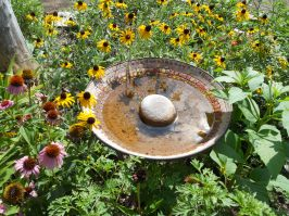 Echinacea & Black Eyed Susan's are still in bloom. Look at the iron in our water tisk tisk