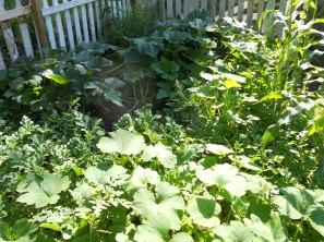 squash's & watermelons, pumpkins & more squash