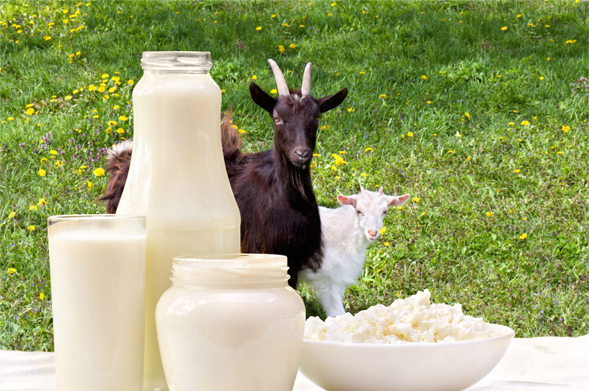 Pure Goat Milk Products