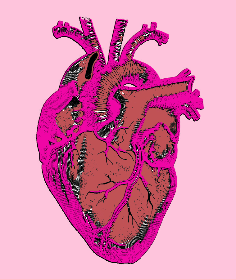 colored.heart.diagram