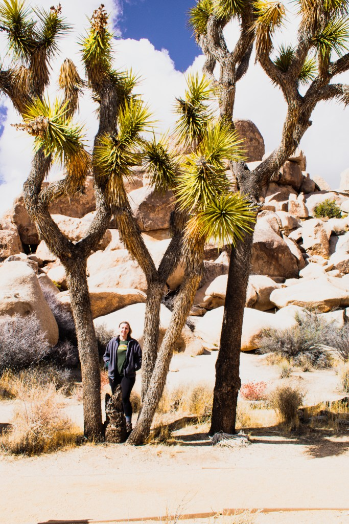 Woman standing beneath a Joshua Tree in Joshua Tree National Park, the first stop of a 4 day National Parks Road Trip