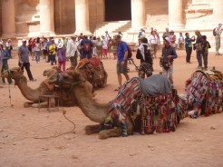 camels-at-petra-600x