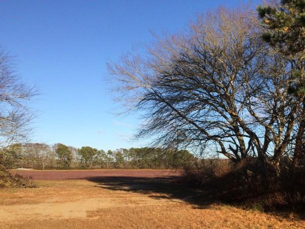 IMG_4469-trees