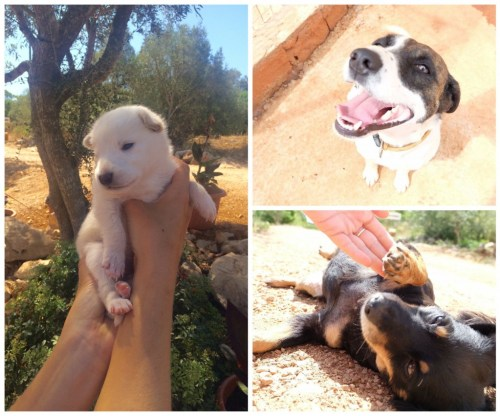 dog-rescue-save-animals-algarve