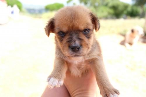 puppy-rescue-dogs-faro-algarve