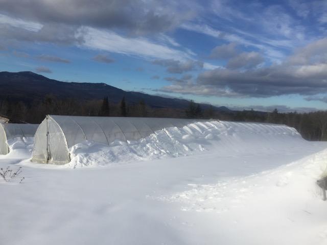 February Farm Field at Good Heart