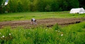 Planting flowers at Good Heart Farmstead