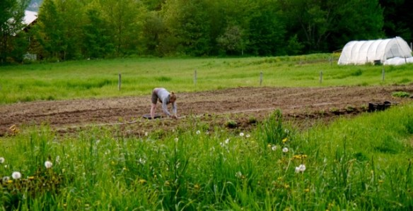 Planting flowers at Good Heart Farmstead