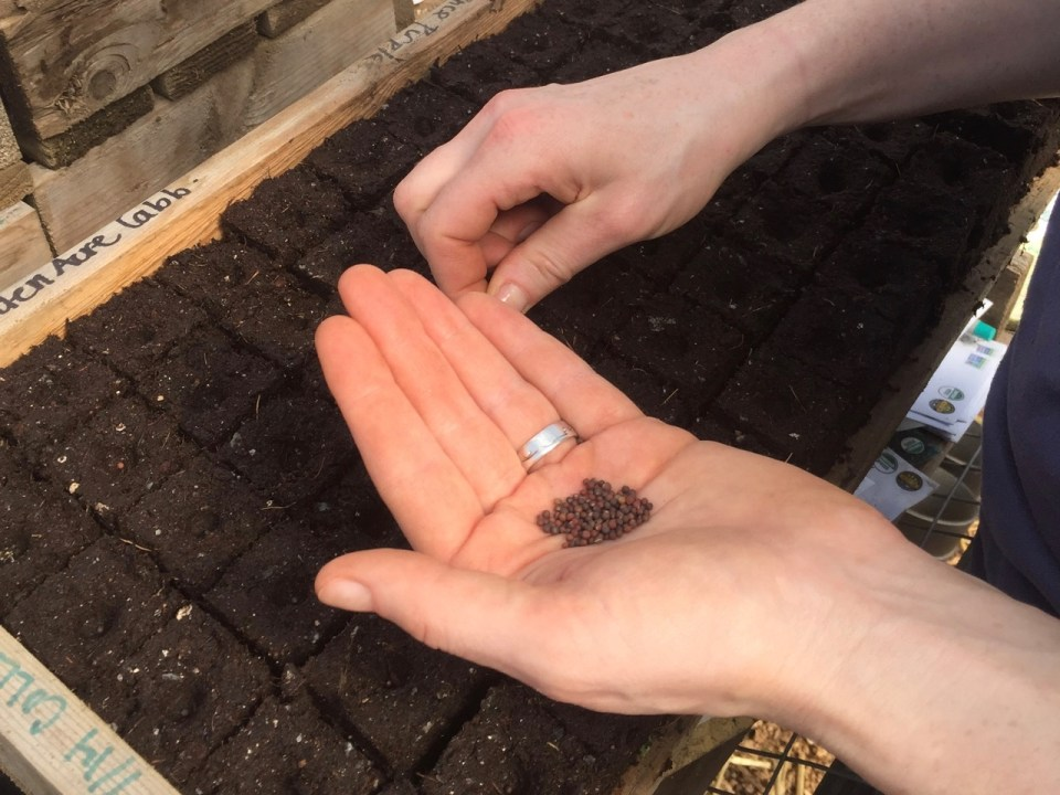 planting organic seeds, my bit of good