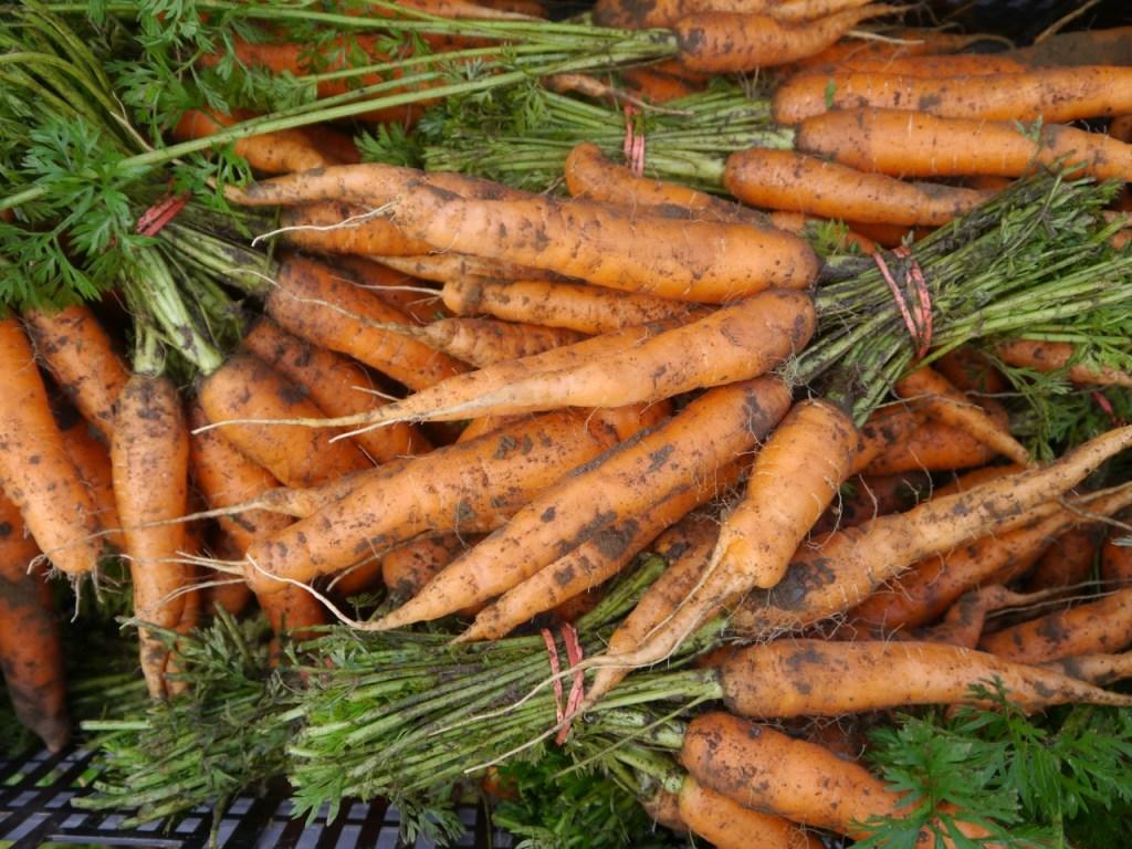 organic carrot bunches