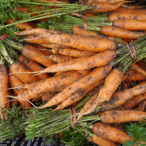 How to Grow Great Carrots