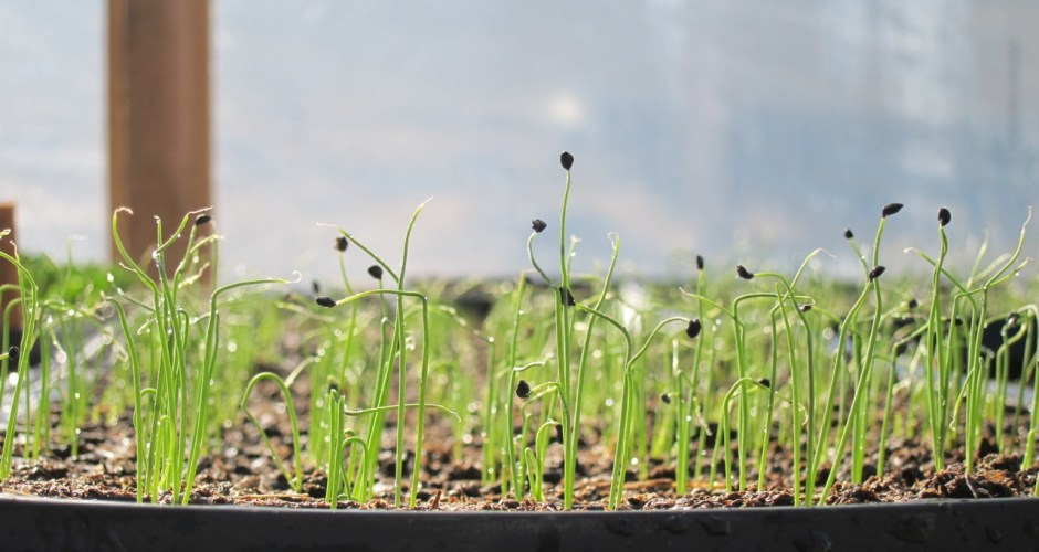 Organic vs. Conventional: Why You Need to Buy Organic Seeds