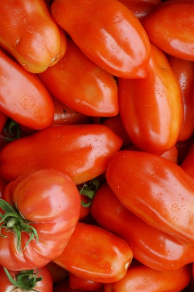 7 Must-Have Organic Tomato Varieties for the Home & Market Garden