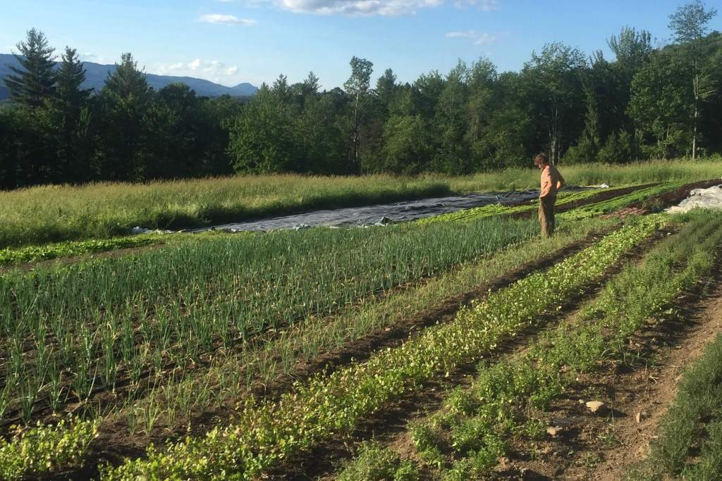 Incorporate silage tarps into your organic weed control strategy