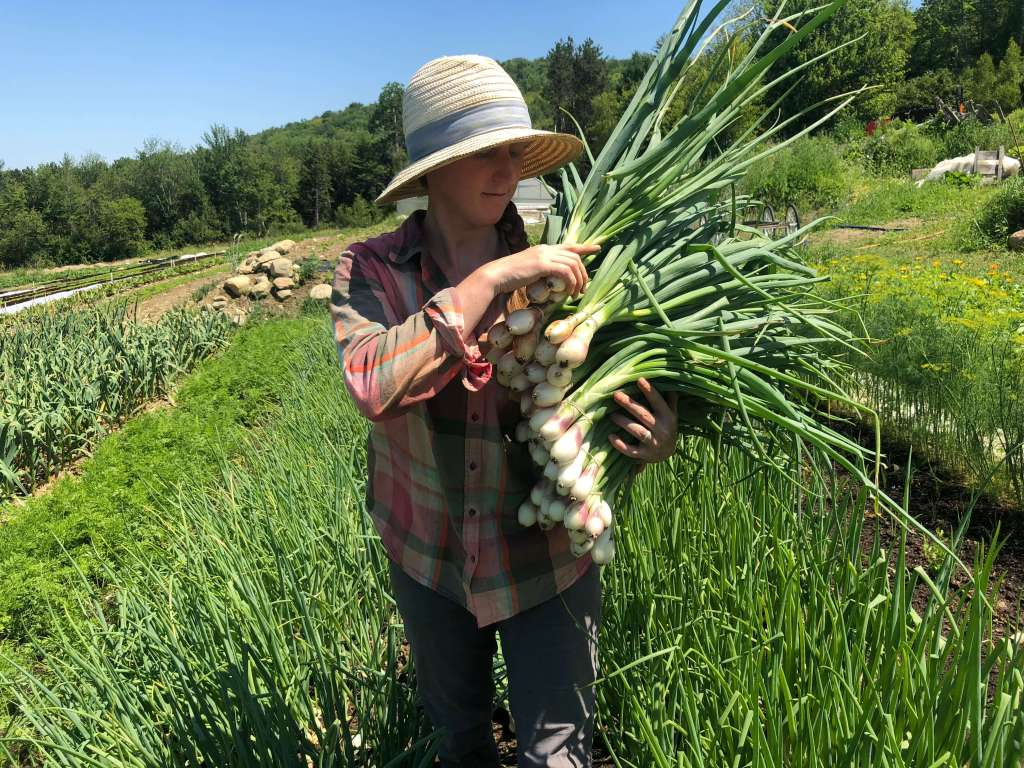 July Harvest at Good Heart Farmstead; go outside, unplug, plant seeds and grow your life