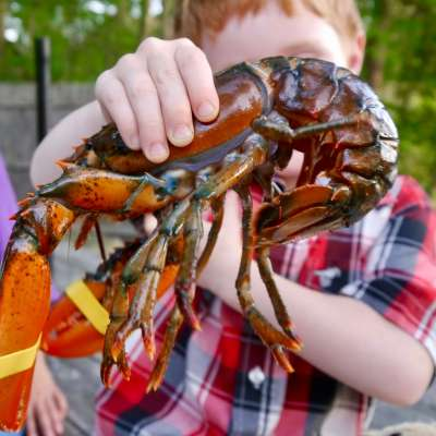 farmers on vacation, eating lobster