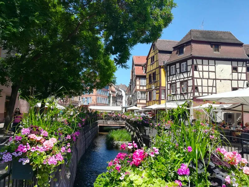 River in Colmar lined with blooming flowers and half-timbered houses