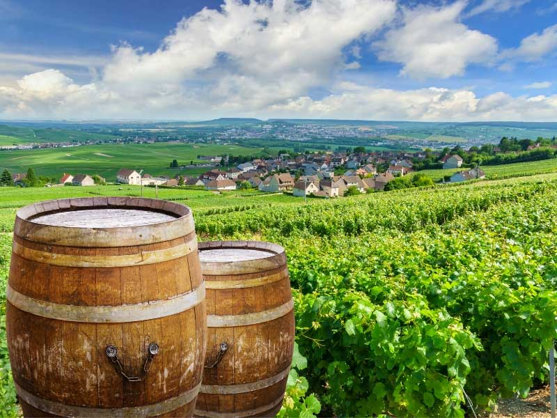 View over Champagne vineyards near Reims Champagne, wooded barrels against green vines