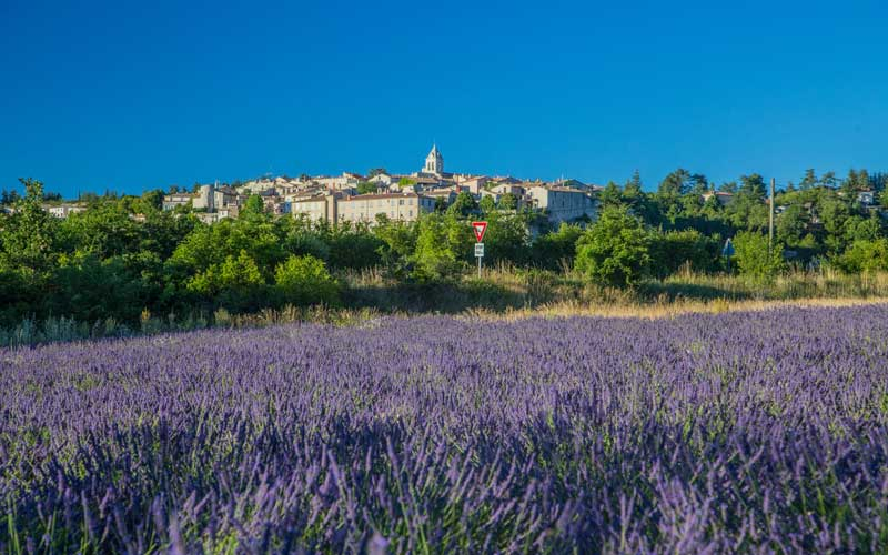 Lavender fields in full bloom around the hilltop village of Sault, Provence