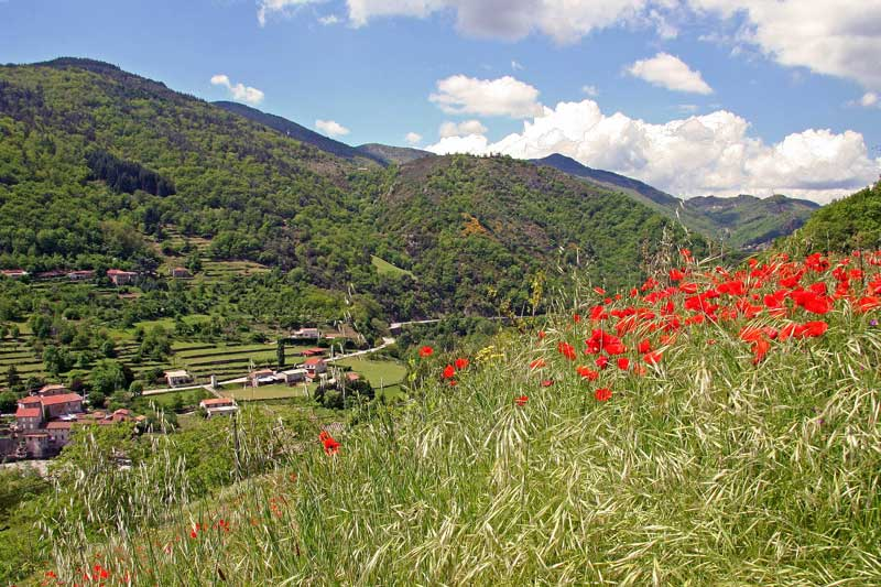 Beautiful valley with poppies growing in fields around mountains and hamlets, Ardeche