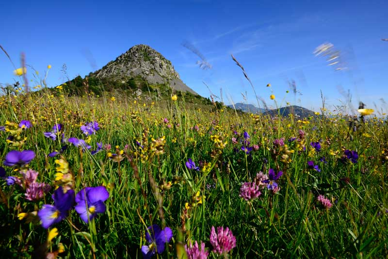 Beautiful meadow full of colourful flowers in Ardeche