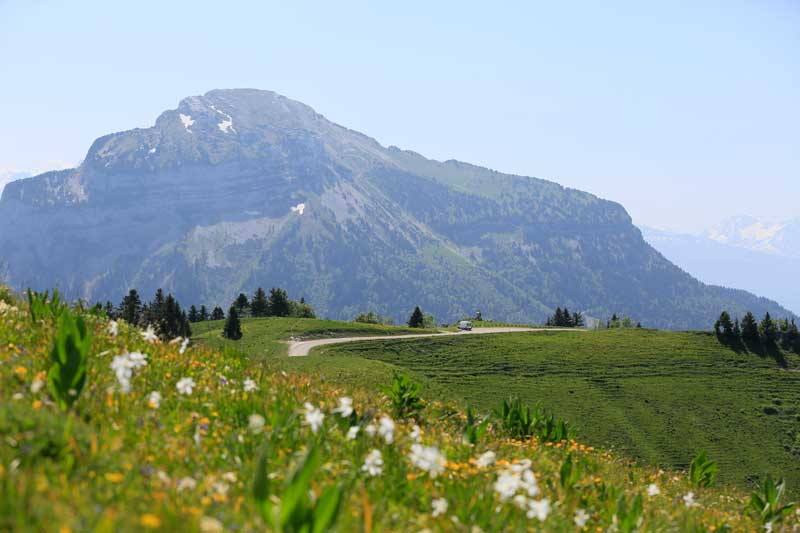 Mountains surrounded by flowering meadows, Chartreuse, Isere