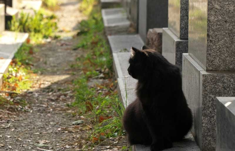 Cat sits at the foot of a gravestone in Montmartre cemetery