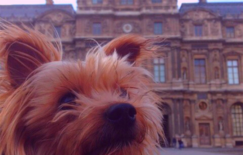 Small dog in front of the Louvre Museum, Paris
