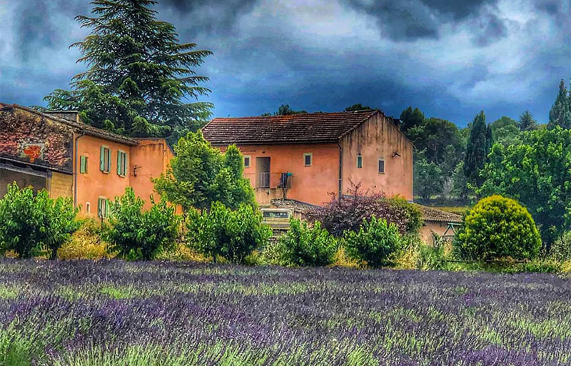 Storm over lavender fields in Goult, Provence