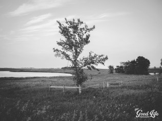 THE GOOD LIFE PHOTOGRAPHY   CLEVELAND AREA PHOTOGRAPHER