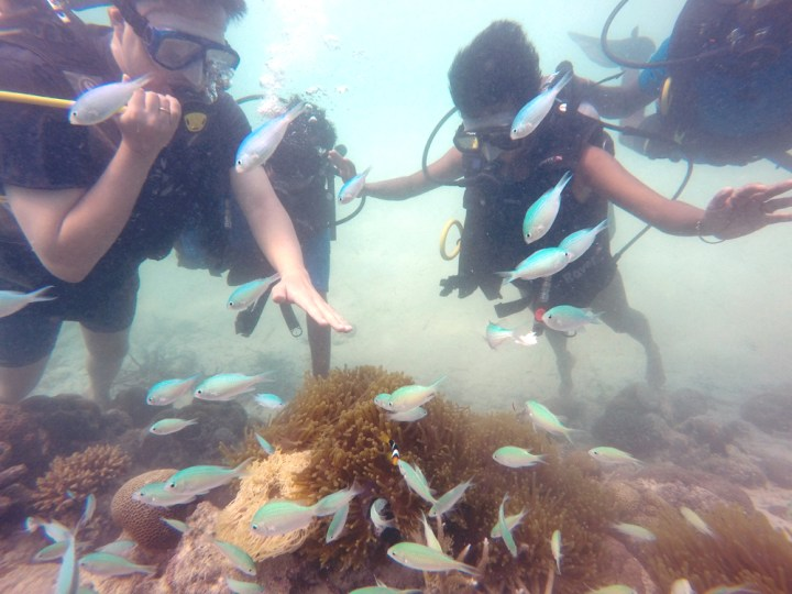 Scuba diving off Bangaram - Lakshadweep islands