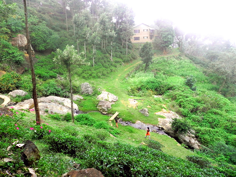 The view of pepper house from hornbill house at OLand